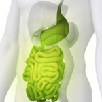Improved Digestive Health